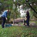 Oberanie jabĺk a práce v záhrade