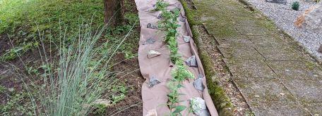 Úprava záhradného areálu css - kolonka - IMG_20200729_105049